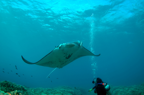 Scuba diving in Maui is even more fun thanks to clear waters and abundant marine life.