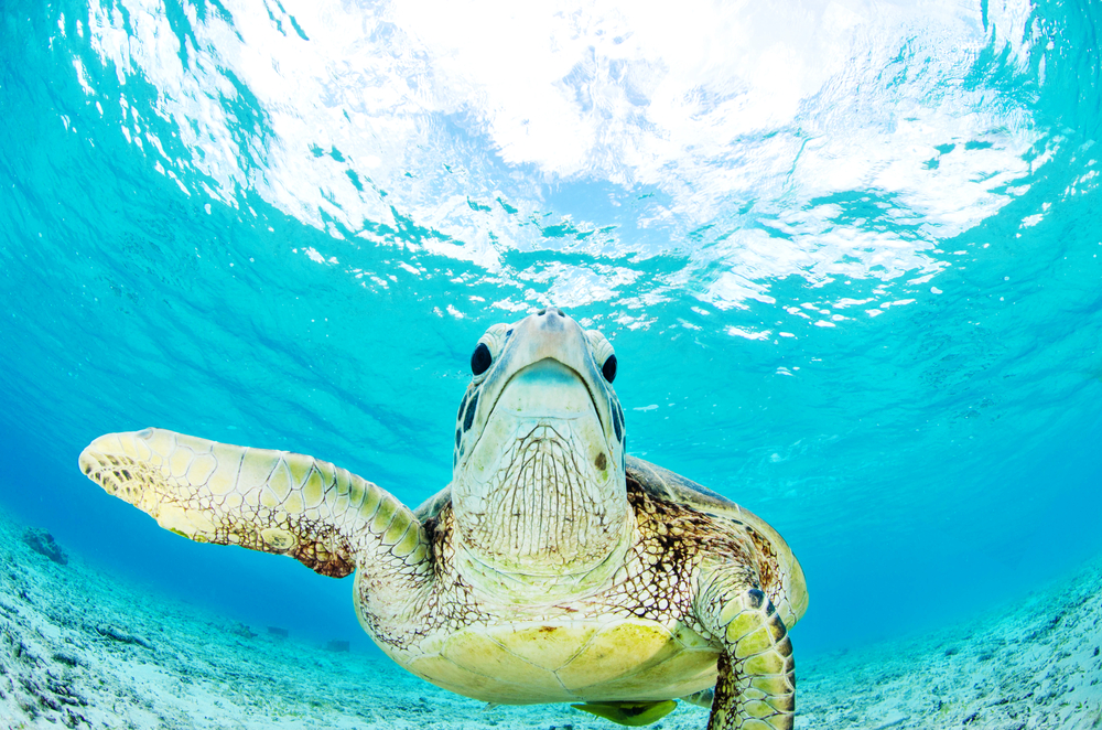 The kids will love observing marine life and hand-feeding turtles in Fiji.